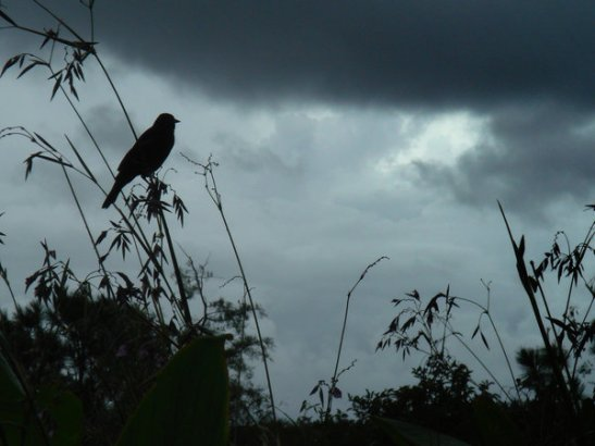bird_storm